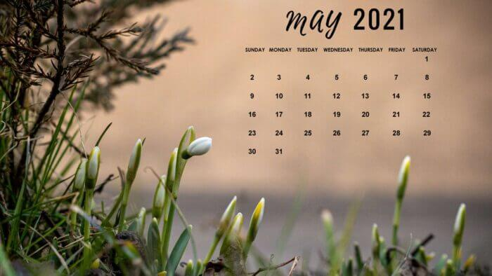 May 2021 Computer Background Calendar